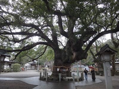 大麻比古神社 (1).JPG