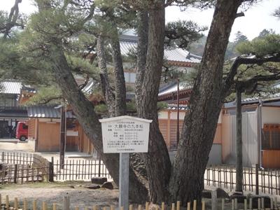 宮島 (3).JPG
