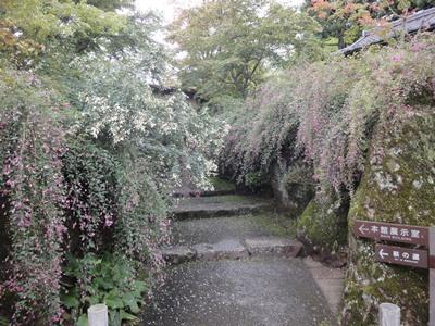 箱根美術館 (2).JPG